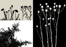 vecteur réel de silhouette d'herbe Images stock