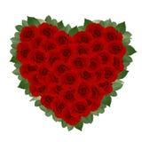 vecteur rose romantique rouge de carte Photos stock