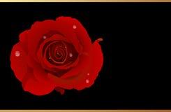 vecteur rose romantique rouge de salutation de carte Photos stock