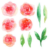 Vecteur rouge de fleurs Photos stock