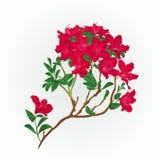 Vecteur rouge de vintage de branche de rhododendron Images libres de droits