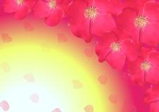 Vecteur sakura Conception des cartes, couverture des invitations Photo libre de droits