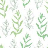 Vecteur sans couture d'illustration de fond de modèle de croquis vert graphique d'herbe d'estragon illustration stock