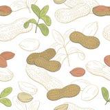 Vecteur sans couture d'illustration de modèle de croquis graphique de couleur d'arachide Photographie stock libre de droits