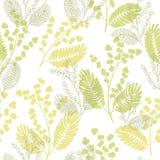 Vecteur sans couture d'illustration de modèle de croquis graphique de couleur de mimosa Photos libres de droits