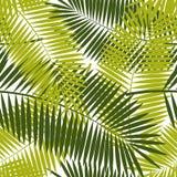 Vecteur sans couture en feuille de palmier de fond de modèle Photo stock