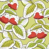Vecteur sans couture rouge d'illustration de croquis de modèle de couleur verte de baie graphique de fraise Images stock
