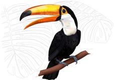 vecteur toucan de toco de dessin-modèle Image stock