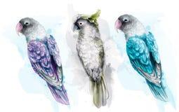 Vecteur tropical coloré d'aquarelle d'oiseaux de perroquet Belles collections réglées exotiques illustration libre de droits