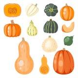 Vecteur végétal végétarien sain organique de nourriture mûre saisonnière décorative orange fraîche de potiron Photos libres de droits