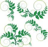 Vecteur vert de vigne Images libres de droits