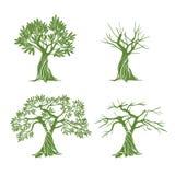 Vecteur vert Olive Trees Photographie stock