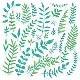 Vecto nature branches collection Stock Images