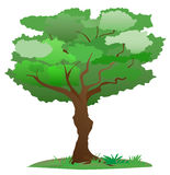 Vector a árvore Imagem de Stock Royalty Free