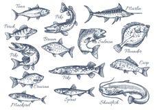 Vector ícones do esboço dos peixes do rio ou do mar Imagem de Stock Royalty Free