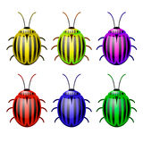 Vector сolorado beetle Royalty Free Stock Images