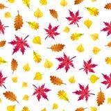 Vector безшовная картина листьев осени на белой предпосылке Стоковая Фотография