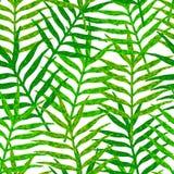 Vector безшовная картина от зеленых листьев на белом backgroun Стоковое Фото