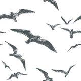 Vector безшовная картина при птицы изолированные на белой предпосылке Стоковая Фотография