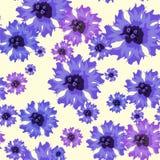 Vector безшовная картина с голубыми cornflowers на белизне Стоковое фото RF