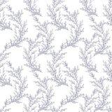 Vector безшовная картина сделанная ветвей нарисованных рукой Monochrome ботаническая винтажная иллюстрация вектора Приглашение t  Стоковые Изображения