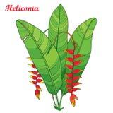 Vector букет с rostrata Heliconia плана или листья цветка и зеленого цвета когтей омара красные на белой предпосылке бесплатная иллюстрация