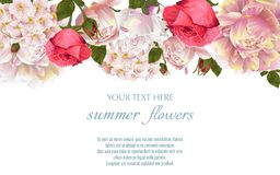 Vector винтажная флористическая граница с flovers пиона и роз Стоковое Изображение