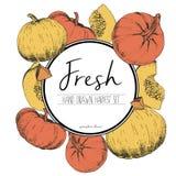 Vector вокруг иллюстрации цвета границы свежих овощей Куски тыквы Стоковые Фото