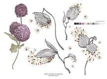Vector дизайнерское собрание комплекта элементов травы листьев зеленой листвы искусства syriaca asclepias естественной Illu декор Стоковые Изображения RF