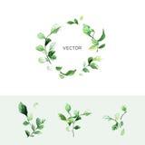 Vector зеленый венок лист с местом для текста и комплекта ветвей с листьями в стиле акварели иллюстрация вектора