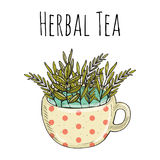 Vector дизайн карточки с нарисованной рукой иллюстрацией чая Декоративная покрывая краской предпосылка с винтажным чаем Стоковое Изображение