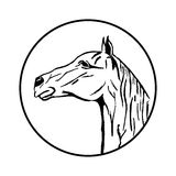 Vector изображение лошади на белой предпосылке Стоковая Фотография RF