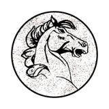 Vector изображение лошади на белой предпосылке Стоковые Изображения