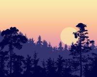 Vector иллюстрация плотного coniferous леса на холме вниз Стоковая Фотография