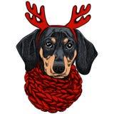 Vector иллюстрация собаки таксы для рождественской открытки Такса с красным цветом связала теплые шарф и рожки иллюстрация вектора