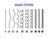 Vector иллюстрация типов диаграммы волос показывая все типы и обозначил стоковое фото