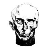 Vector иллюстрация детальных человеческих черепа и стороны Стоковое Изображение RF