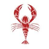 Vector иллюстрация красного омара на белой предпосылке Стоковые Фотографии RF