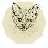 Vector иллюстрация при малый портрет кота изолированный на яркой предпосылке Стоковое Фото