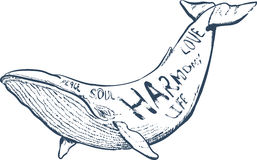 Vector иллюстрация с китом, морской рукой нарисованная литерность, Стоковая Фотография RF