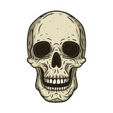 Vector иллюстрация человеческого черепа в стиле нарисованном рукой Стоковые Изображения