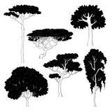 Vector иллюстрация эскиза черных силуэтов различных деревьев на белой предпосылке Сосна, береза, дуб, акация и Стоковая Фотография RF