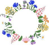 Vector карточка с травами в круге - зверобоем, Angustifolium, стоцветом, колокольчиком, cornflowers, эхинацеей Стоковая Фотография RF