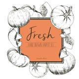 Vector квадратная иллюстрация цвета границы свежих овощей Куски тыквы Стоковое Фото