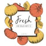 Vector квадратная иллюстрация цвета границы свежих овощей Куски тыквы Стоковые Изображения