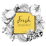 Vector квадратная иллюстрация цвета границы свежих овощей Нарисованный рукой комплект выгравированный годом сбора винограда вегет Стоковая Фотография RF