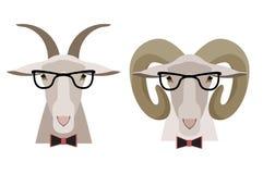 Vector коза, овцы в стеклах и смычок Стиль шаржа плоский Стоковые Фотографии RF