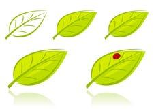 Vector комплект зеленых листьев Стоковое Изображение