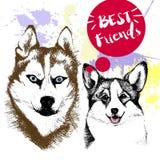 Vector концепция нарисованная рукой сибирского huskyr и frienship corgi welsh Стоковое Изображение