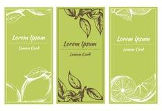 Vector поздравительная открытка с эскизом лимона и цветков Стоковое фото RF